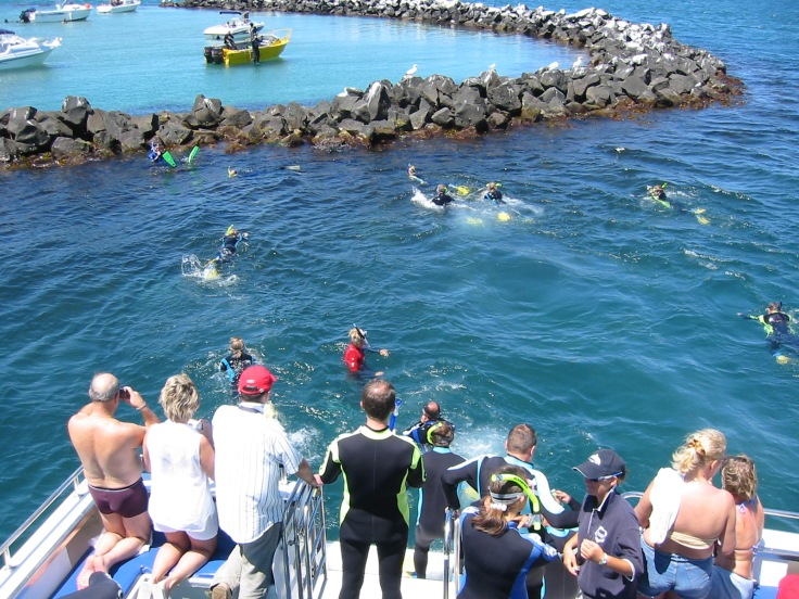 Swimming with Dolphins departing Sorrento